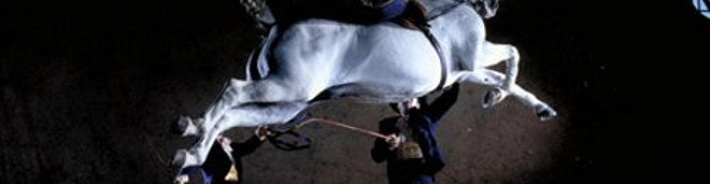 Индивидуальная экскурсия в Херез (шоу лошадей и винные погреба)