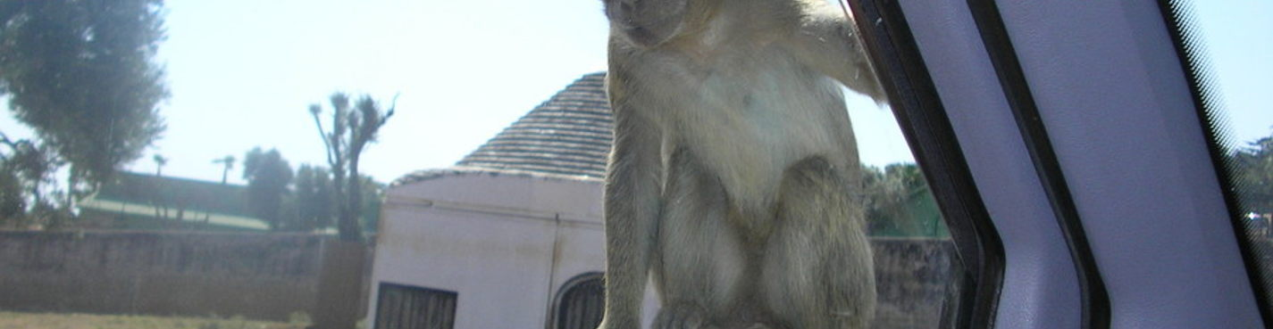 Захватывающее путешествие в сафари-парк Апулии