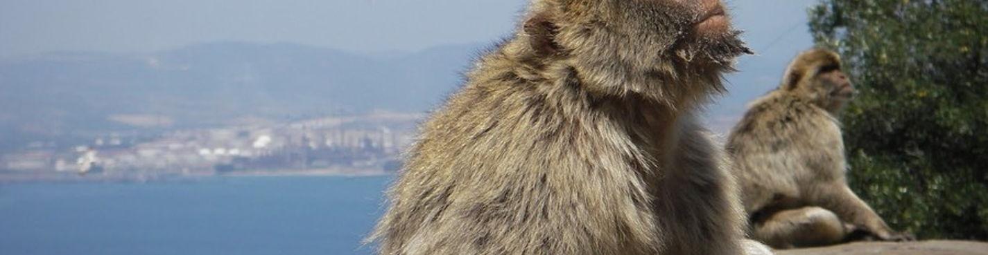 Индивидуальная экскурсия в Гибралтар с личным гидом