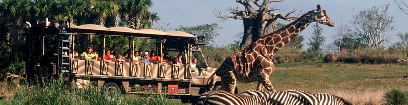 Экскурсии в Орландо. Парк Disney's Animal Kingdom