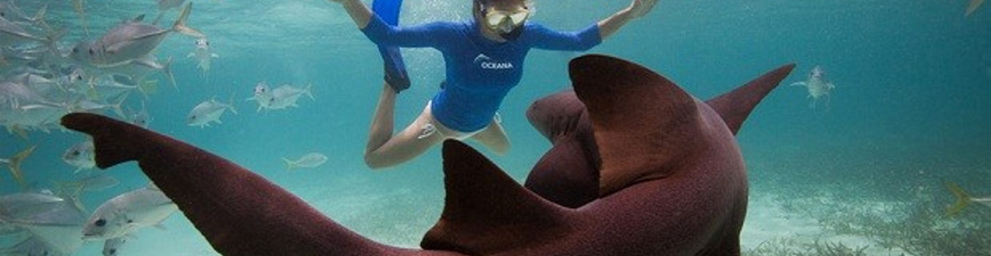 Плавание с акулами + морские черепахи