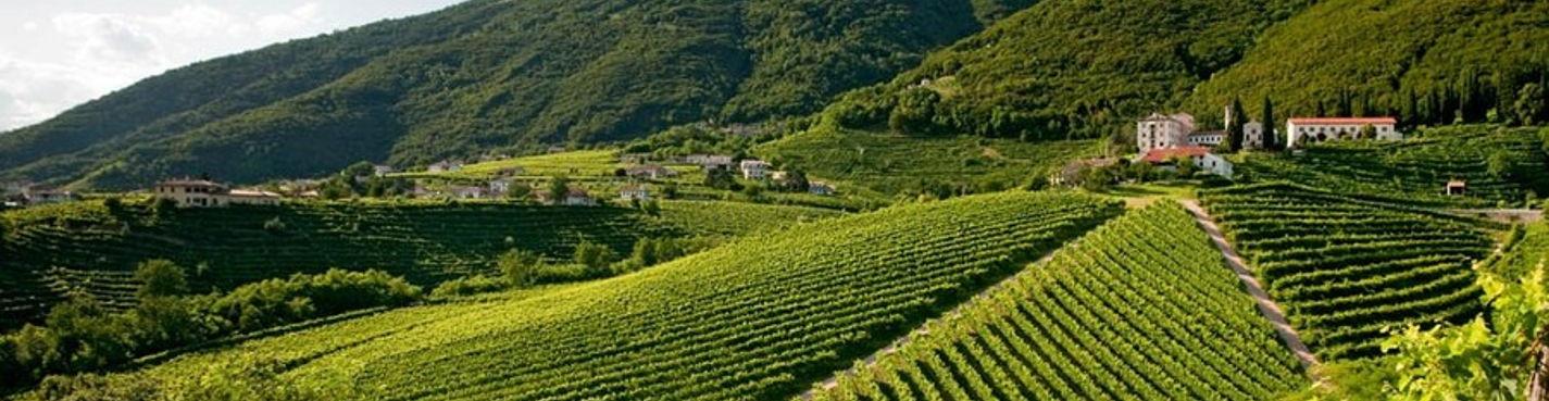 Винный тур (Эуганские холмы, холмы Виченцы и Тревизо)