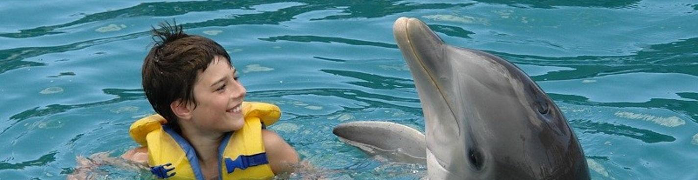 Мои Дельфины