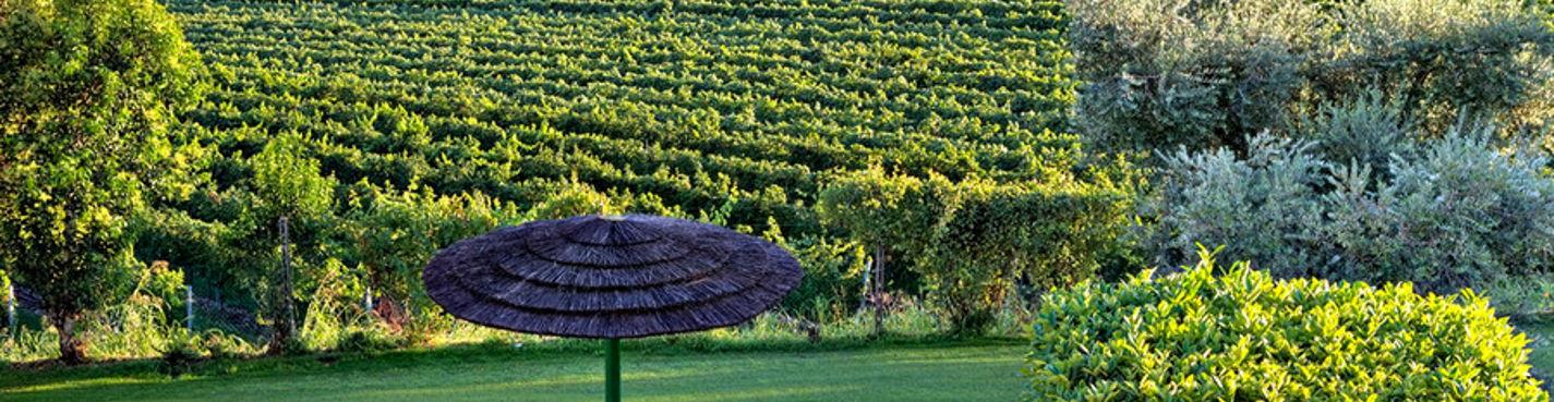 Винный тур (возможно заказать Ваших любимых производителей вина)