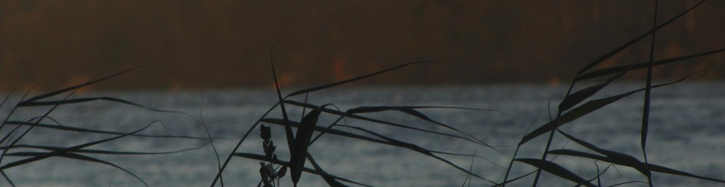 На берегах Вольной Невы. Экскурсия - фотосессия.