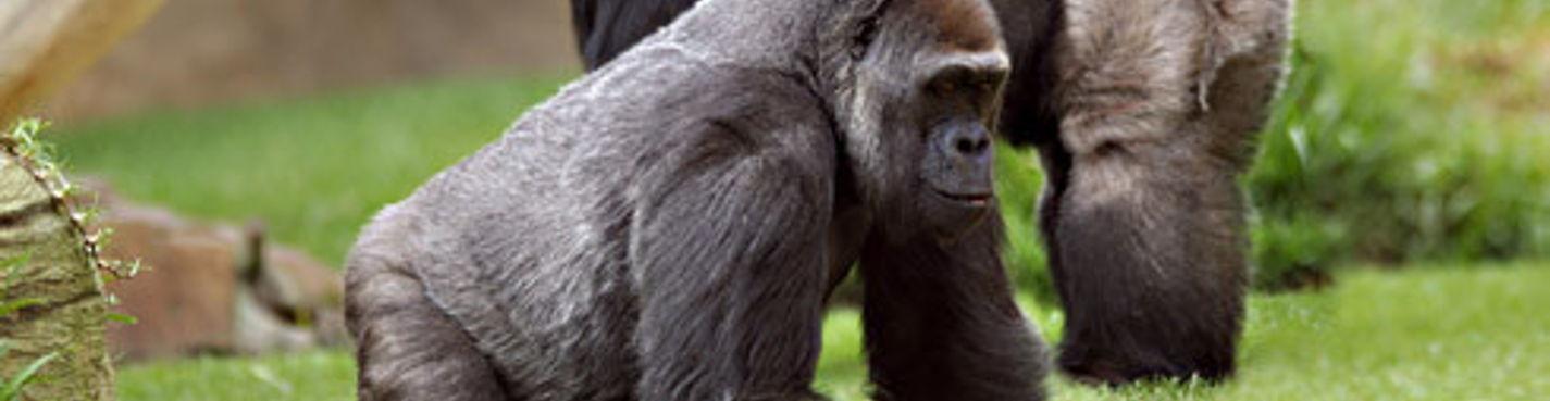 Африканский зоопарк, биопарк и школа верховой езды