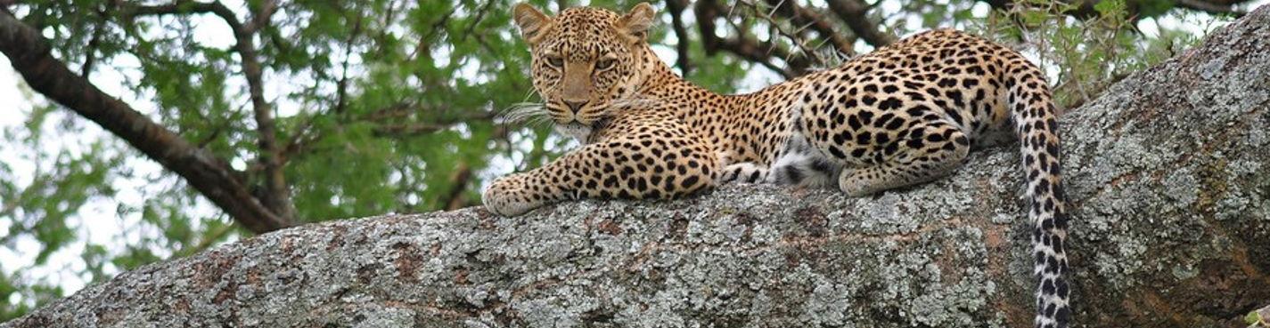 Сафари по национальным паркам Кении