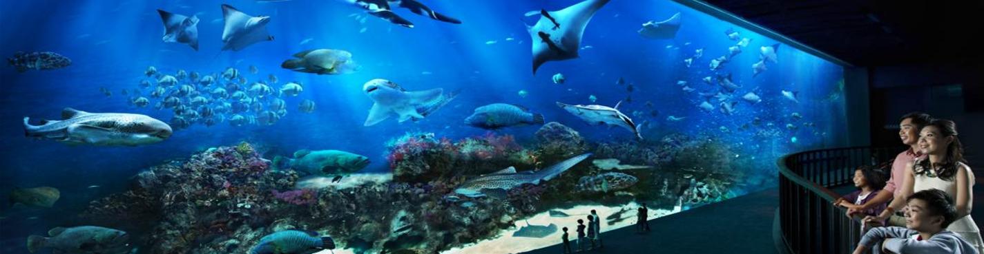 Билет в океанариум S.E.A Aquarium