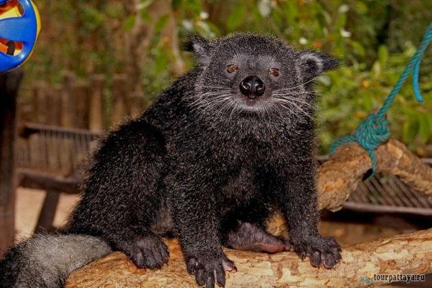 Экскурсия в Паттайя: Поездка в зоопарк Кхао Кхео