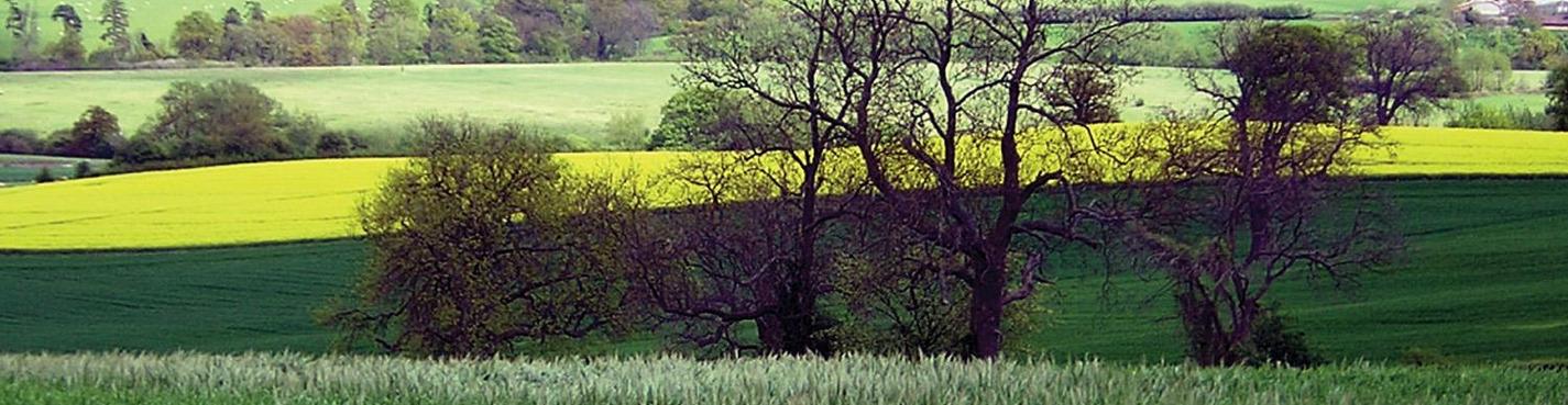 Оксфорд, Стратфорд, Котсвольд и замок Варвик, Крайст-черч колледж .