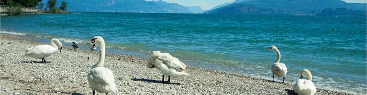 Озеро Гарда — экскурсия по Оливковой Ривьере