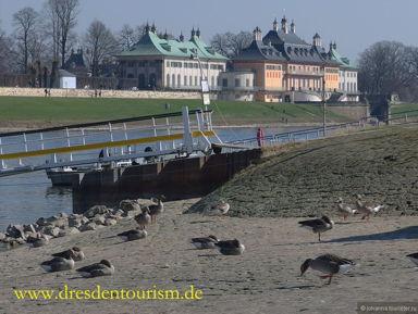 Поездка в парк замка Пильниц, Дрезден