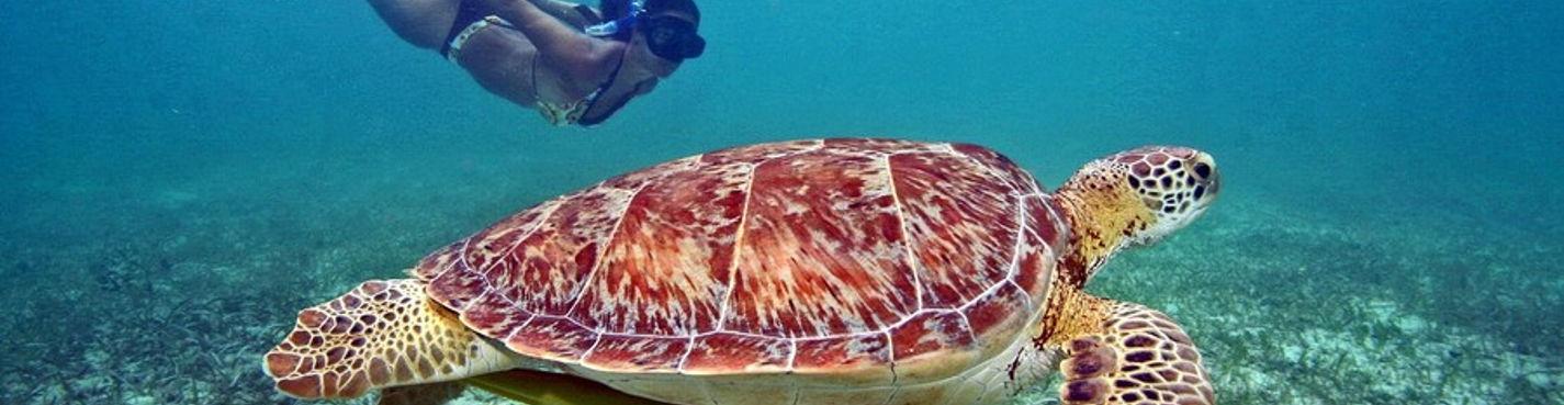 Мексика: плавание с черепахами в открытом море и одни из самых красивых Сено