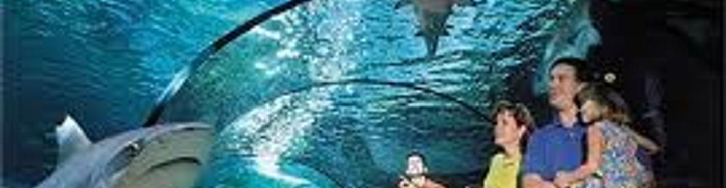 Волшебный мир нового океанариума «Голубая Планета» в Копенгагене! Будьте первыми!