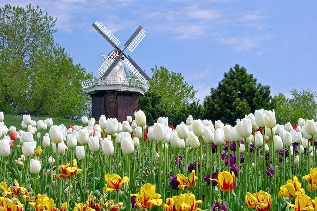Экскурсия в Амстердаме: Тюльпаны, которые вы не забудете никогда