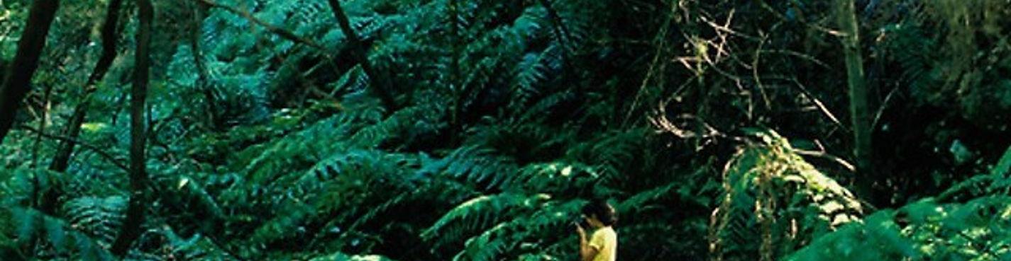 Остров Гомера — Групповая экскурсия
