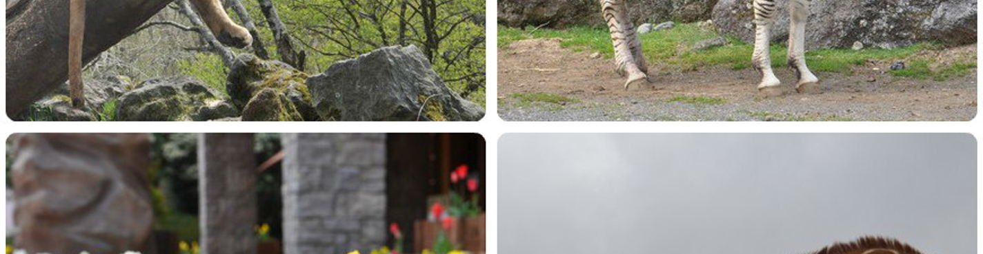 Сафари парк и Хаконе