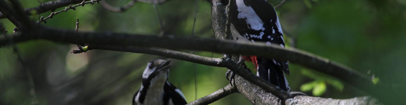 Птицы и достопримечательности Битцевского парка