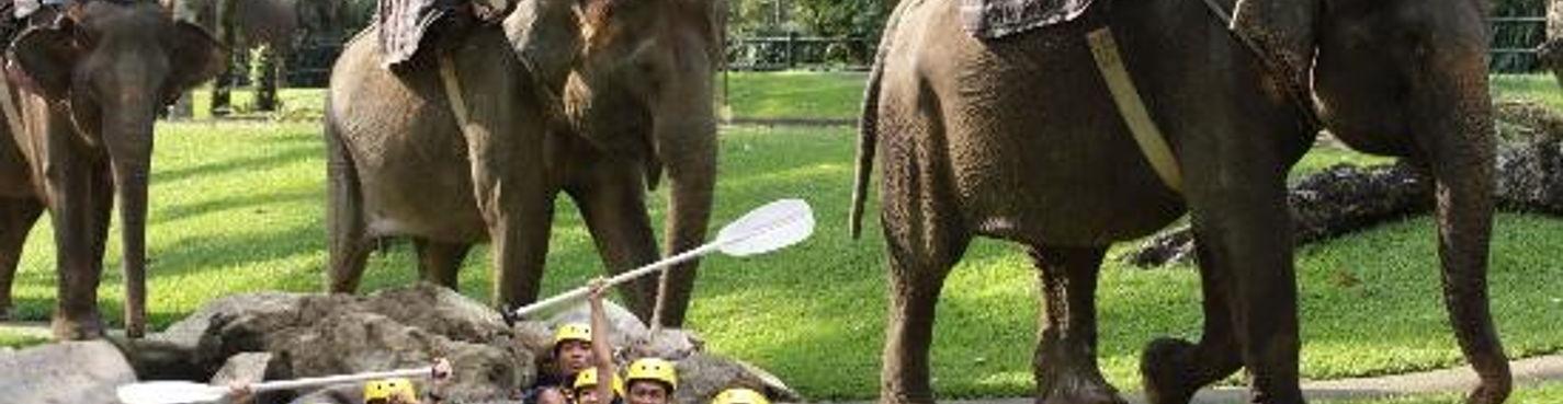 2в1 Рафтинг и Сафари на слонах