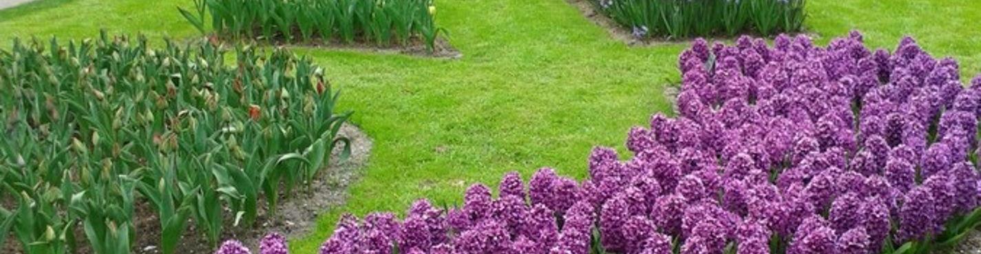 Кёкенхоф — голландский Сад Европы.