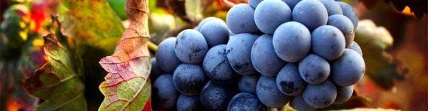 Бароло: родина великого вина. Пьемонт. Италия.