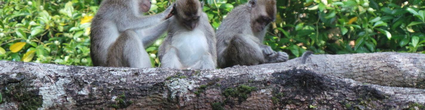 Тур Сепилок. Орангутан+Пещера Гомантонг+Река Кинабатанг+Природный тур Сандакана