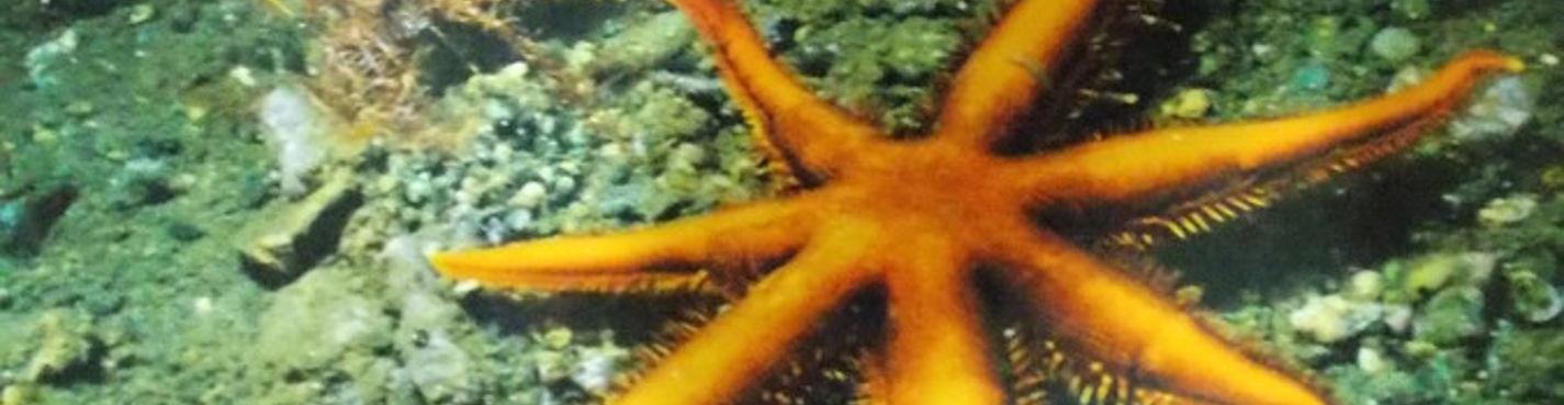 Подводное плавание (дайвинг)