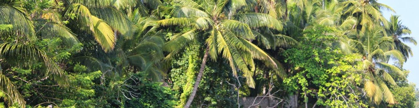 Экскурсия по мангровым зарослям речки Бентота
