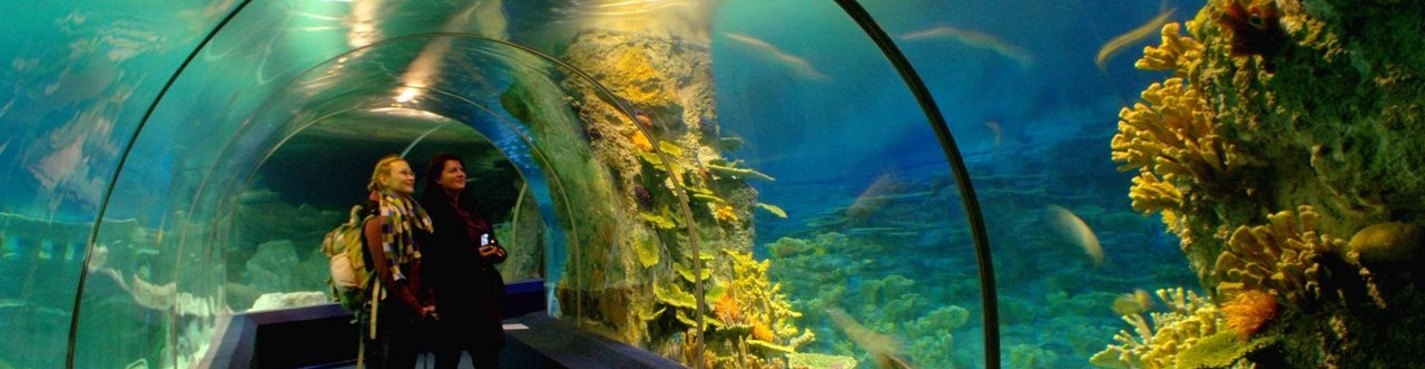 Билет на свободную дату входа в океанариум