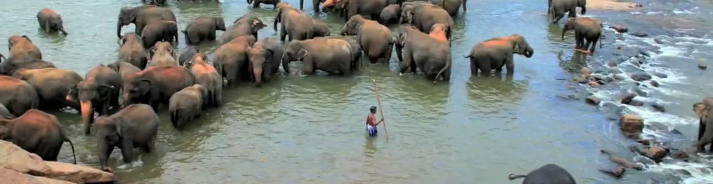 Сигирия-Дамбулла-Канди-Нувара-Элия-Элла (4-дневный тур по Шри-Ланке))
