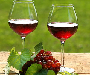 Wine tour in Lviv