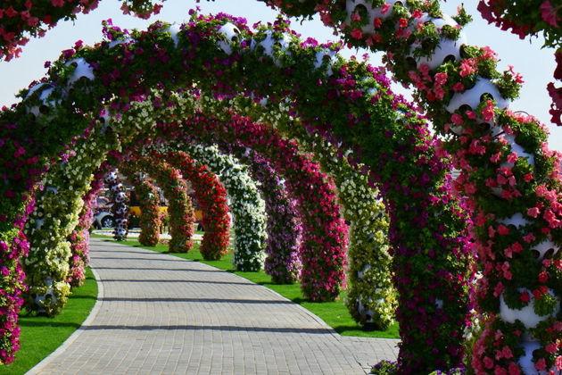 Парк цветов Miracle Garden + Global Village