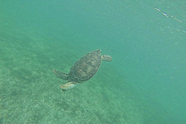 Экскурсия в Канкуне: Руины Тулума и плавание с черепахами в Акумале